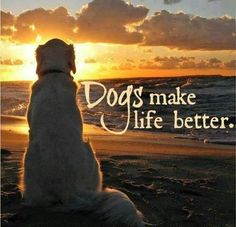 This is shared from Dog Lovers International. - This is shared from Dog Lovers International. This is shared from Dog Lovers Internati - Love My Dog, Puppy Love, Animals And Pets, Cute Animals, Pet Sitter, Mundo Animal, Dog Quotes, Funny Quotes, Yorkshire Terrier