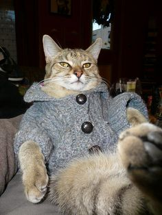 148 Best cats wearing sweaters images
