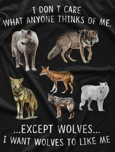 Like the animals eh Wolf Quotes, Animal Quotes, Animals And Pets, Funny Animals, Cute Animals, Teen Wolf, Totems, Of Wolf And Man, Wolf Stuff