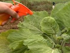 Se você usar vinagre no seu jardim, estas 11 maravilhas vão acontecer! - iDicas