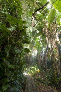 """Importiertes Paradies: Ein Holzsteg führt durch den tropischen Regenwald der """"Biosphäre 2"""""""