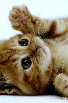 Super süßes Kätzchen