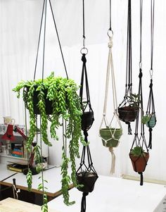 Green decor: Hanging houseplants