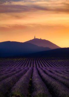 "coiour-my-world: ""Sunset over Mont Ventoux Visualisation, Lavender Fields, Verona, Provence, Vineyard, France, Sky, Sunset, Landscape"