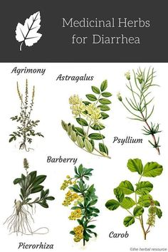 Natural Holistic Remedies diarrhea remedies - Information on the Beneficial Uses and Side Effects of Medicinal Herbs as Herbal Remedies for Diarrhea Treatment and Relief Holistic Remedies, Natural Health Remedies, Herbal Remedies, Healing Herbs, Medicinal Plants, Natural Herbs, Natural Healing, Natural Foods, Natural Products