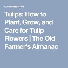 Tulips: How to Plant, Grow, and Care for Tulip Flowers | The Old Farmer's Almanac