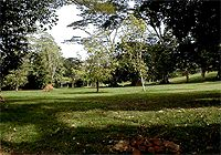 Entebbe Botanical Gardens a must see. Got to see a lot of different trees and flowers and some animals. Get a tour guide if you go. Where The Heart Is, Tour Guide, Botanical Gardens, Uganda, Places Ive Been, Trees, Outdoor Decor, Flowers, Animals