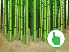 How to Cut Bamboo. Bamboo has many advantages over several other kinds of wood. It grows phenomenally quickly, making it less expensive than many other varieties. The grain is attractive, and it's set in such a way as to make the wood. Bamboo Barrier, Bamboo Canes, Outdoor Living, Outdoor Decor, Outdoor Ideas, Image Title, Backyard Projects, Vegetable Garden, Outdoor Gardens