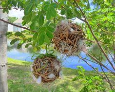 DIY Grapevine Nesting Balls by J Staake   Birds & Blooms Blog---we can make trimmed vine balls.