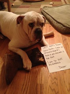 I thought it was a chew toy http://www.dogshaming.com/2013/05/i-thought-it-was-a-chew-toy/
