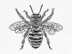Insect Clipart 'Queen Bee' Line Art Transfer Honey Bee Printable Image for Card Making, Scrapbooking, Decoupage, Design, Paper Crafts. Insect Clipart, Bee Drawing, Image Deco, Illustrations Vintage, Bee Images, Vintage Images, Tableau Design, Vintage Bee, Queen Bees