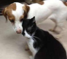 Barney Is An Adoptable Dachshund Dog In Greensboro Nc Barney Is