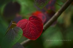Love is everywhere Nature Red leaf