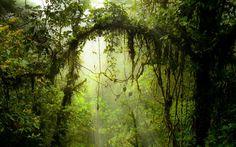 """""""LA PURA VIDA""""... Costa Rica: bella desde sus ciudades y pueblos, con majestuosas playas y volcanes; con una amplia diversidad de microclimas que puedes disfrutar en un mismo día; hogar de los ticos y ticas, famosos por su hospitalidad y alegría. Este destino se ha posicionado en el primer lugar en el Índice de Planeta Feliz y es el más verde de los países del mundo, ¡bienvenido a Tiquicia!..."""