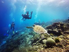 Zanzibar's beaches are a picturesque sight to behold; however the true beauty of the island lies under the ocean surface. Named as the 'world's leading dive destination' in the 2015 World Travel Awards, it's definitely worth taking the plunge and explorin