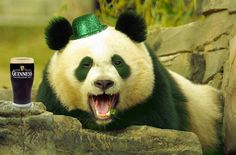 """Panda says: """"Dude, racism is stupid. I am black, white, and Asian, But everyone loves me! We Are The World, In This World, Faux Profil, Stop Racism, Anti Racism, Make Love, Love Everyone, Panda Love, Happy Panda"""