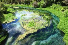 Image result for blue springs