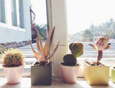 Via Justina Blakeney - All Roads textile studio visit. Windowsill succulent garden in pastel pots.