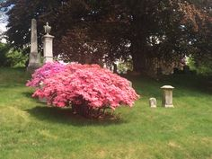 Beautiful spring blossoms at Greenwood Cemetery. Greenwood Cemetery, Spring Blossom, Blossoms, Brooklyn, Plants, Beautiful, Flowers, Plant, Florals