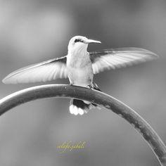 #wildanimals #total_fauna #ke_animal #animalfanatics #wms_animals #igshotz #www_natures #igglobalwomenclub #people_and_world #www_photography #fotofanatics_nature_ #fotocatchers_member #moments4ig #insta_gram_shooters #pas_pictures #snapshots_daily #h2o_natura #dm_photolife #dm_photolife_nature #theoutcreww  #land_and_wild #igcanada_ #capturehub  #earth_shotz #shotsbyyou_  #www_bnw #animales_totales by solafa.jabali
