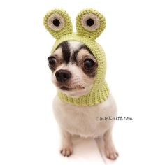 Dog Hat Crochet Frog Funny Pet Hats Dog hat Chihuahua Cat Hat Frog Dog Hat for Winter Crochet A Crochet Dog Clothes, Crochet Dog Sweater, Crochet Frog, Crochet Hats, Tiny Dog Breeds, Crochet Humor, Funny Crochet, Designer Dog Clothes, Golden Retriever