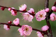 Plum Blossoms by Takashi Imaoka - Photo 141085637 / 500px