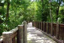 """New Port Richey, FL: """"James E. Grey Preserve""""  Plathe Rd., 2 miles of hiking trails in the Florida Great Birding Trail, manatee viewing and a fishing pier"""