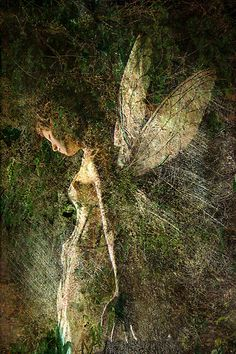 ≍ Nature's Fairy Nymphs ≍ magical elves, sprites, pixies and winged woodland faeries - Titania by Thomas Dodd