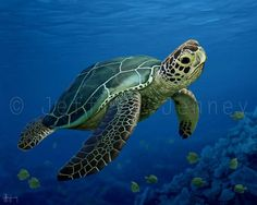 Green Sea Turtle - 8x10 Fine Art Print From An Original Painting By Jeffrey Jenney - Ocean Art on Etsy, $25.00