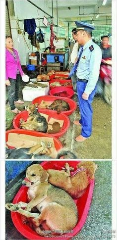 Dog meat trading in China. SICK SICK SICK