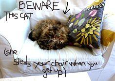 dirty tactics Cats, Gatos, Cat, Kitty, Kitty Cats