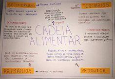 Mapa Mental de Ecologia : Cadeia Alimentar Studyblr, Bullet Journal, School, Carrara, Google, Anime, Social Studies, Study Notes, School Supplies