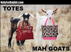 funny-lol-totes-mah-goats-humor-joke-lol-meme-photo-pictureaa