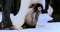"""After Successfully Taking Its First Steps, He Says """"Yay!"""""""