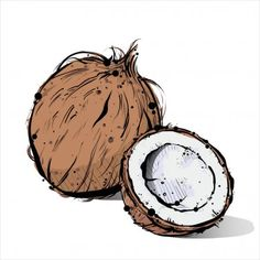 Hand draw of coconut. Coconut Bowl, Pie Coconut, Coconut Cheesecake, Coconut Macaroons, Coconut Curry, Coconut Shrimp, Coconut Flour, Coconut Water, Coconut Oil Uses For Skin