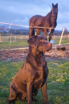 A lab & a horse....how much better can it get?  :)