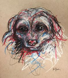 Tika the Shihpoo Expressive sketch with colored pencil, pen and pencil www.juliepfirsch.com
