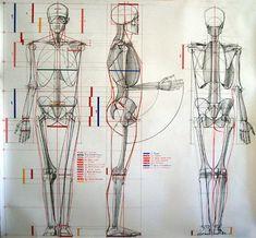 Risultati immagini per struttura corpo umano disegno