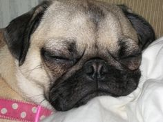 Buffy Sleeping -----> My brother is on twitter https://twitter.com/StinkyWrinkles