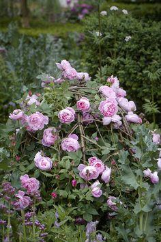 Journal - Arne Maynard Garden Design Rose on Willow form Rose Garden Design, Rose Design, Chelsea Flower Show, Beautiful Roses, Beautiful Gardens, Rose Dome, Parfum Rose, Chelsea Garden, Plant Supports