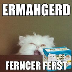 ERMAHGERD - LOLcats is the best place to find and submit funny cat memes and other silly cat materials to share with the world. We find the funny cats that make you LOL so that you don't have to. Funny Animal Pictures, Funny Animals, Animal Memes, Animal Pics, Funniest Animals, Animal Funnies, Adorable Animals, Animal Sayings, Animals Dog