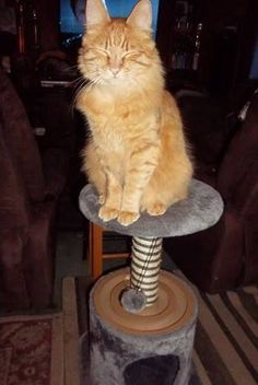 Customer sent us this photo of her cat on his Velocity cat tree.  He loves the…