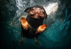 Estas Delirantes Fotos Capturan Las Caras De Muchos Perros Cuando Se Sumergen Bajo En Agua