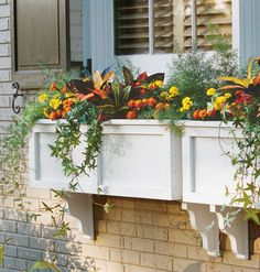 Asparagus fern, Ivy, Marigolds & Crotons  When choosing window boxes, bigger is better! The box height should be at least a quarter of the window height, and it can be as large as a third of that measurement. Be sure that the box has plenty of drainage holes in the bottom for water to escape -- a must for healthy plants.