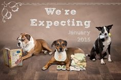 The Stir-16 Fun Ways to Include Your Family Pet in Your Pregnancy Reveal (PHOTOS)