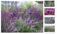 Designing for Cutting Flowers thinkingoutsideth. Designing for Cutting Flowers thinkingoutsideth. Purple Garden, Colorful Garden, Shade Garden, Garden Plants, Garden Borders, Ornamental Grasses, Landscaping Plants, Dream Garden, Garden Planning