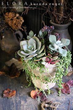 Succulents Garden, Flora, Plants, Plant, Planets