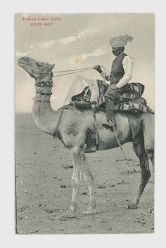 Postcard featuring black and white image of man wearing turban, seated on camel, made circa 1900 - Old Photos, Vintage Photos, The Wonderful Country, Adelaide South Australia, Work In Australia, Australian Vintage, Camels, Good Old, Afghanistan