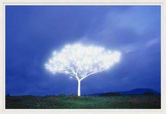 , Tree of Life 5-2-1, #Lumas
