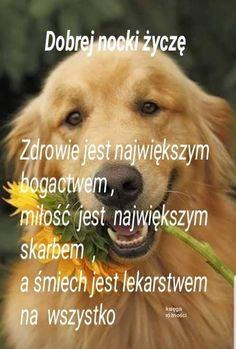 Dogs, Animals, Good Night, Animales, Animaux, Pet Dogs, Doggies, Animal, Animais